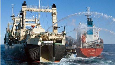 US court brands whale activists Sea Shepherd 'pirates'